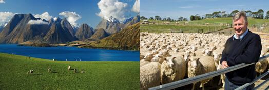 国内乳企全球布局羊奶源 羊奶粉行业成待开发蓝海